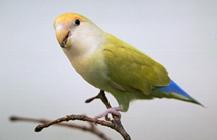 parasites_in_birds-1