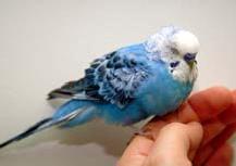 recognizing_a_sick_bird-1