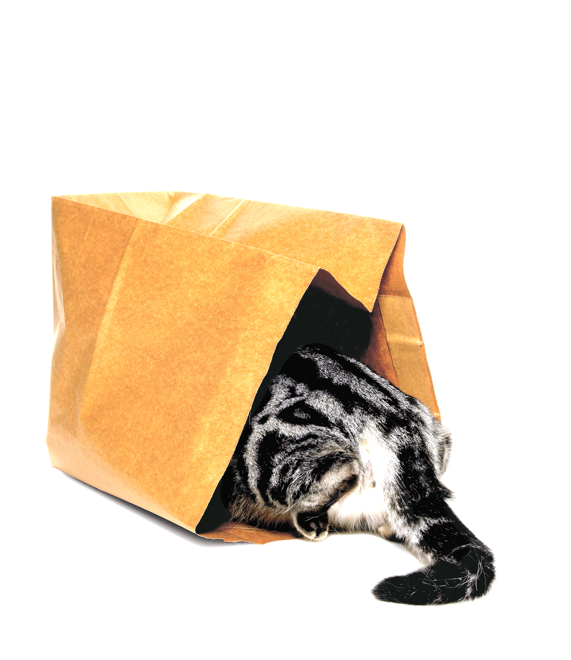 cat_in_bag