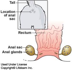 anal_sac_disease_-_1_-_2009