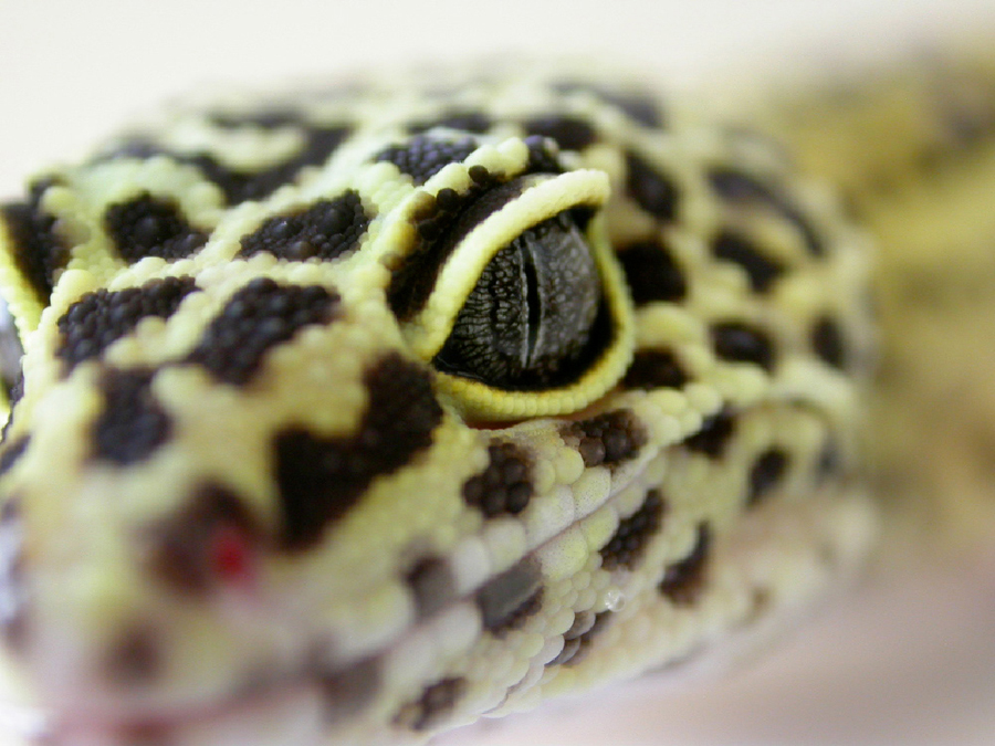 annual_reptile_visit-1