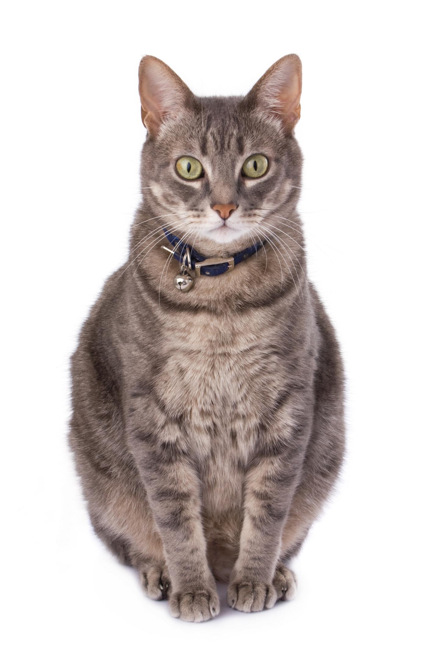 over-cat