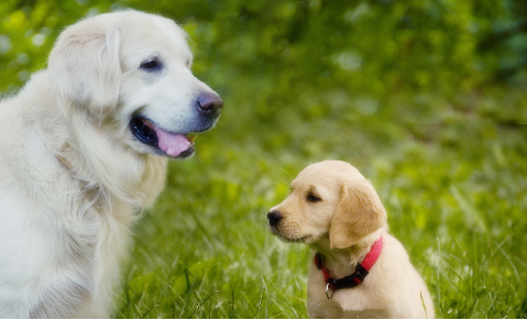 dog_behavior_and_training__introducing_a_new_dog_to_your_family_dog